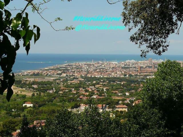 Bilocale arredato con ampia terrazza vista mare. - Livorno - Dom