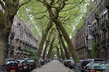 The Lomanstraat around the corner with its tilted trees.