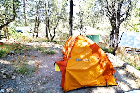 🏕Campsite w/Lake View at ITH Big Bear Hostel ⛰