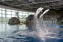 Shedd Aquarium is 10 minutes away or 2.5 miles from the property!