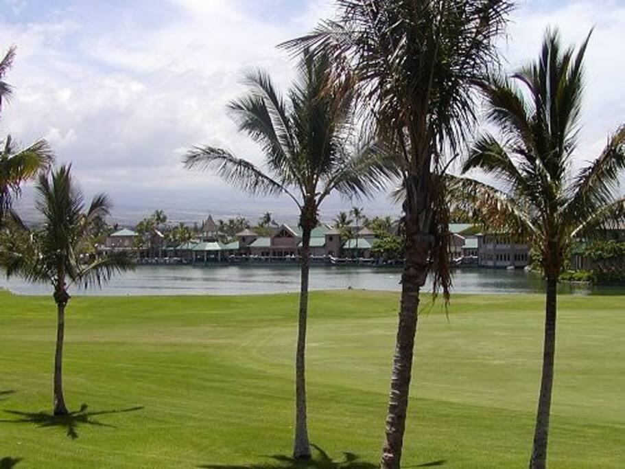 Palm Tree,Tree,Field,Grass,Grassland
