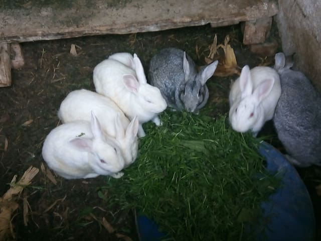 Chaukot rabbit farmstay