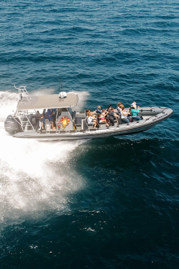 Fastest whale watch boat in California