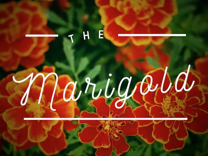 Southtown Marigold | Riverwalk 6min |WalkScore 81