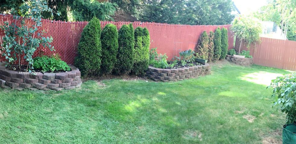 Backyard -1