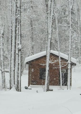 Little cabin in the woods