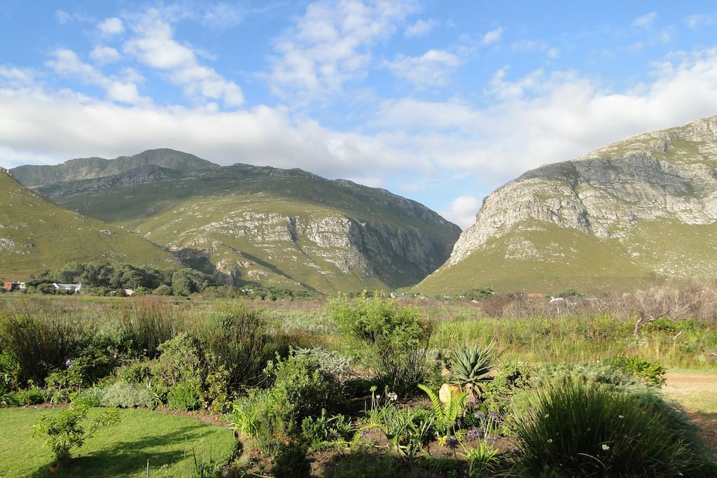 View from the bedroom: the Kogelberg Mountains framing the Harold Porter Botanical Garden