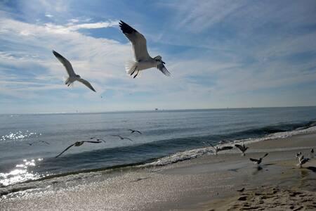 Plantation 2 bd/2 ba GROUND FLOOR - Gulf Shores - Συγκρότημα κατοικιών