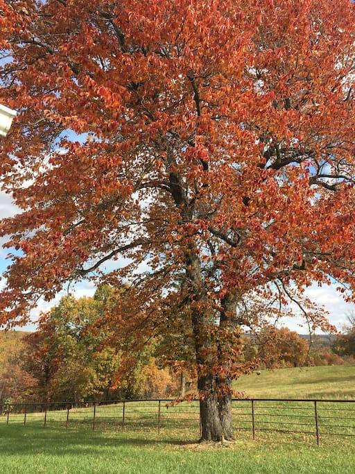 Vibrant Fall Colors