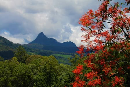 Farm /Mt Warning/ Tweed Valley/ Byron/Murwillumbah