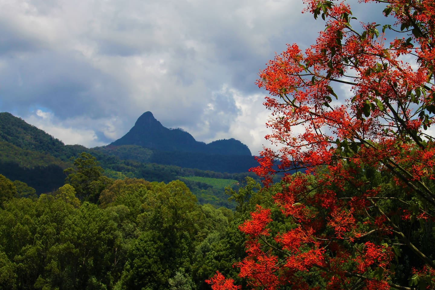Mt Warning View from our hillside deck