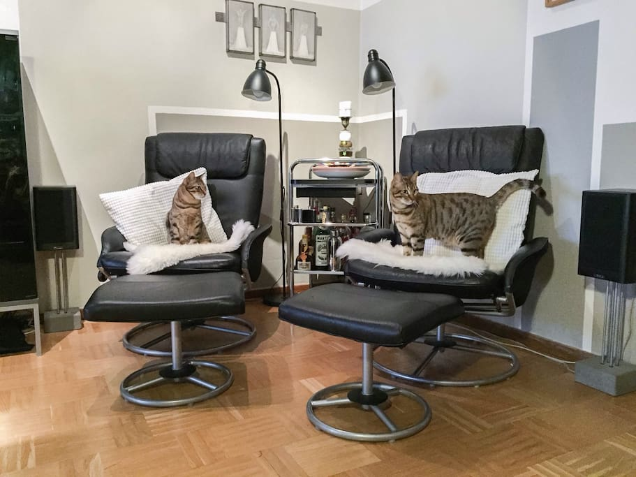 My cats chilling in the livingroom.
