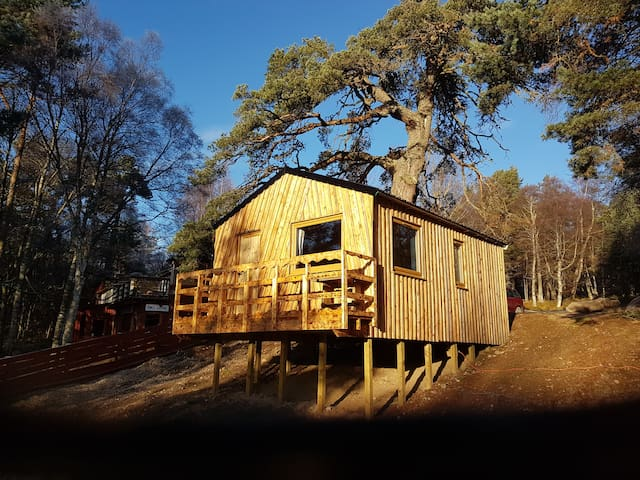 Glenmore Tree House (Tree Spirit Lodge)