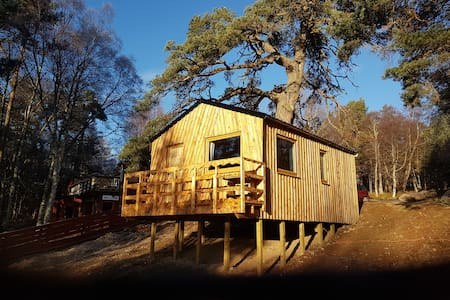 Glenmore Tree House (Tree Spirit Lodge) - Glenmore