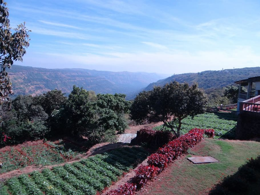 The fields of organic produce and the valley view beyond