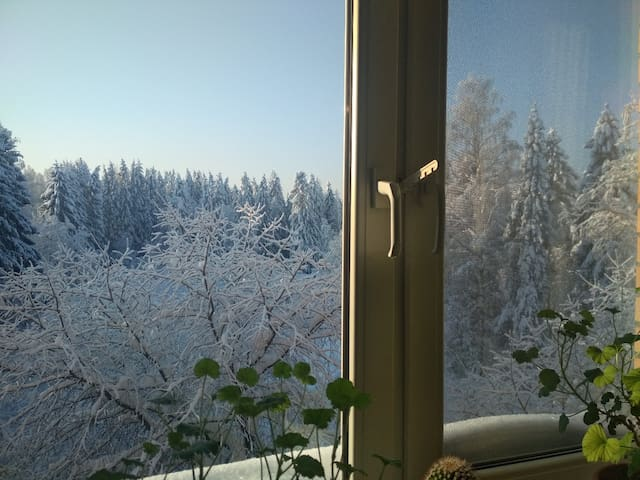 New year with forest view