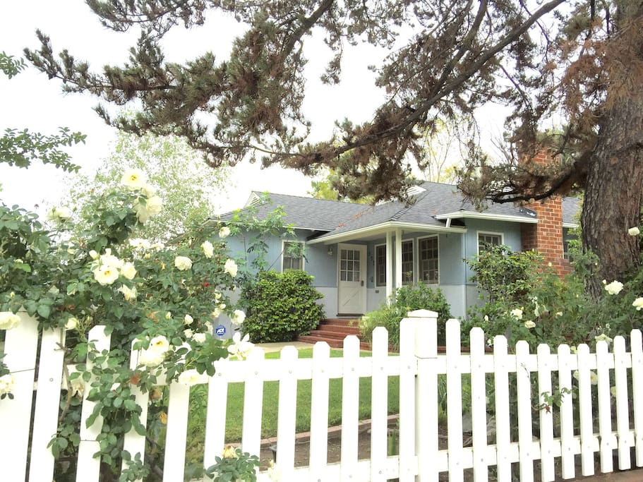 Traditional American house with white picket fences and rose bushes.