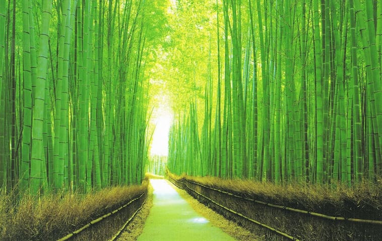 Mindfulness Apartment in Bamboo Forest Kyoto 301