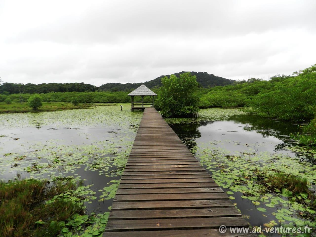 Prises de vue du logement ; Logement entier disponible, équipé, climatisé... Maison de la nature/Marais des yiyis (Sinnamary)