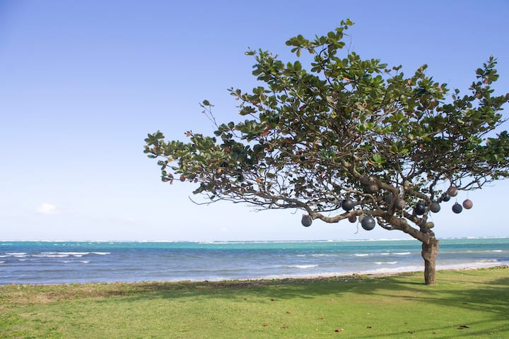 Brand New, Beach Front, Villa Aloha 30-day min