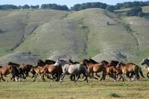 Cervara di Roma Cavalli