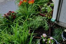 Tiny flower garden by patio breakfast table