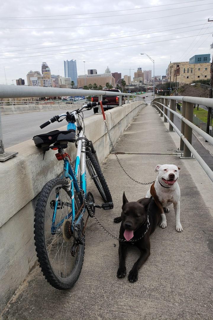 San Antonio Downtown and The Loyal buddy