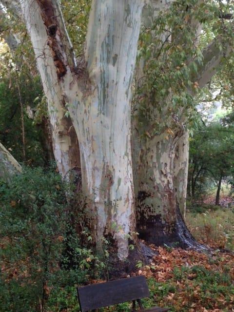 Animas Creek Labyrinth and Retreat