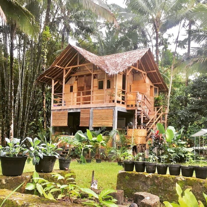 Surf shack in the jungle