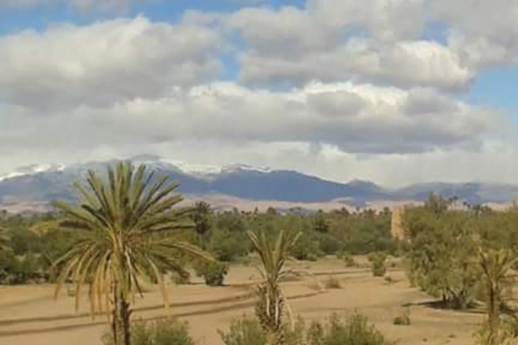 Palmier et neige