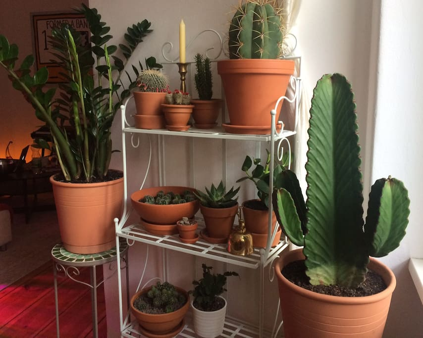 our cacti farm