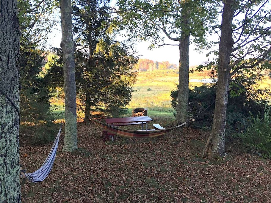The grove in fall.