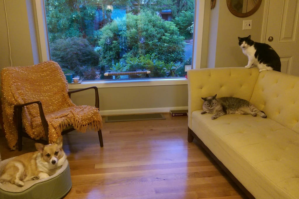 My fur family: Gidget the Corgi, Dinah the Siamese/Tabby, and Misa the tuxedo cat.