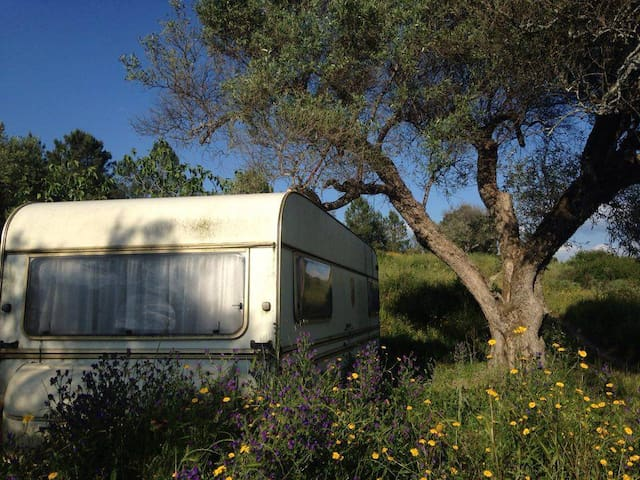 Spacious caravan in rural setting - Vale de Prazeres
