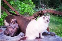 Gilbert the cat
