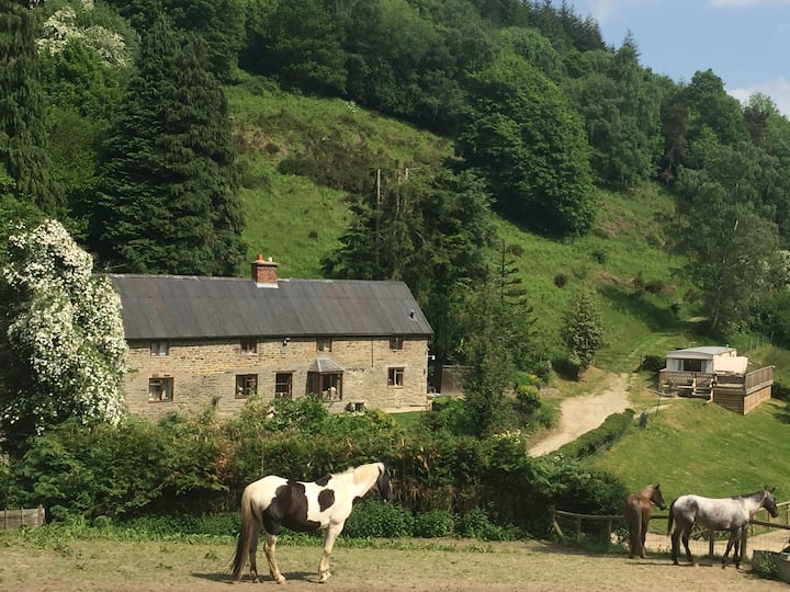 Darky Dale Forest Self Catering Static Holidays