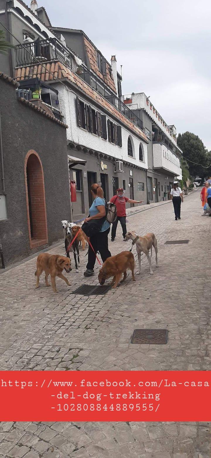 La casa del dog trekking