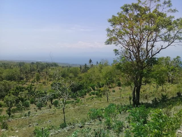 Land for lease..9300 sqm at nusa penida. Great view sunset and sunrise.  For US $ 7000 / 100sqm