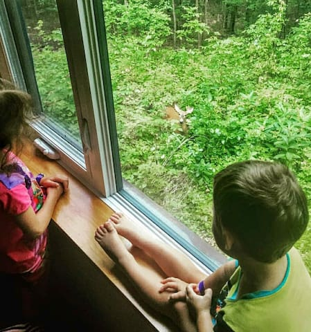 Kids and a deer checking each other out