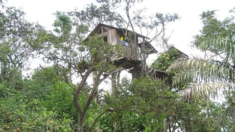 Casa del árbol Búho