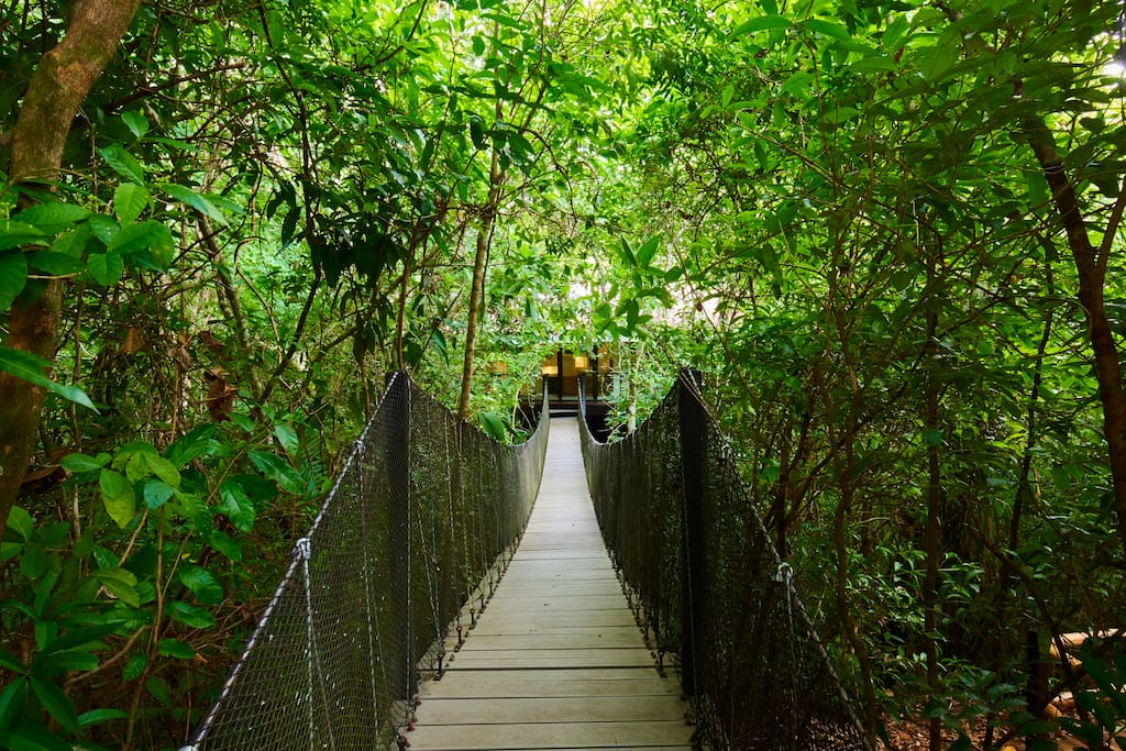 Hanging bridge towards the Treehouse