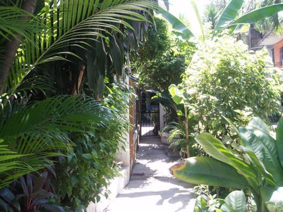 Walkway to gate.
