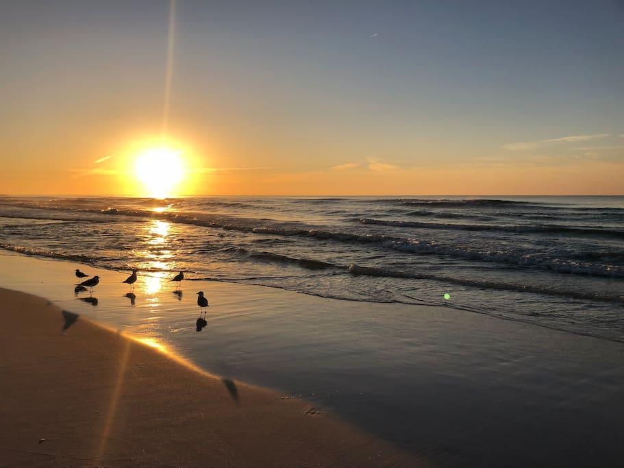 Apartments For Rent In Destin Florida