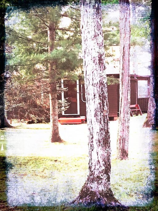 View of cottage through pines.