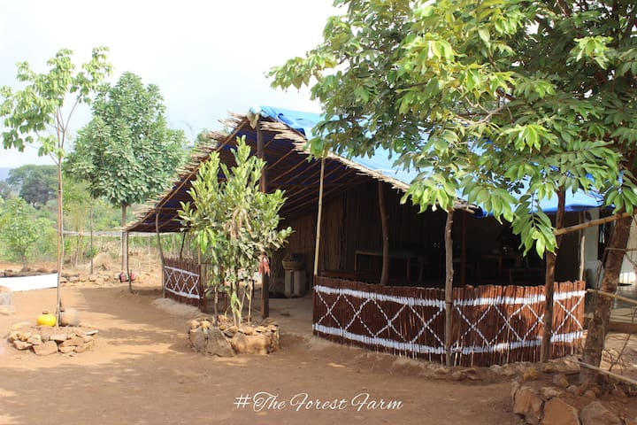 The Forest Farm  Agro Tourism Campsite