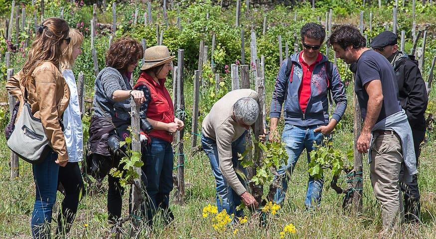 Enjoy a wine maker experience and taste local food