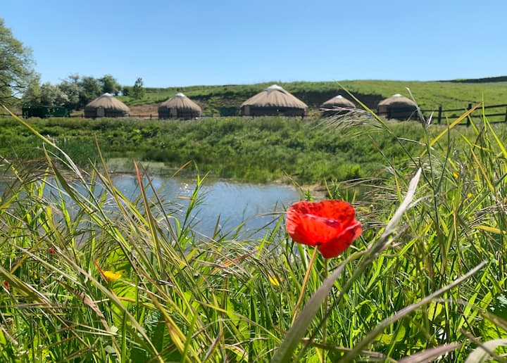 Shire Farm Yurt Village