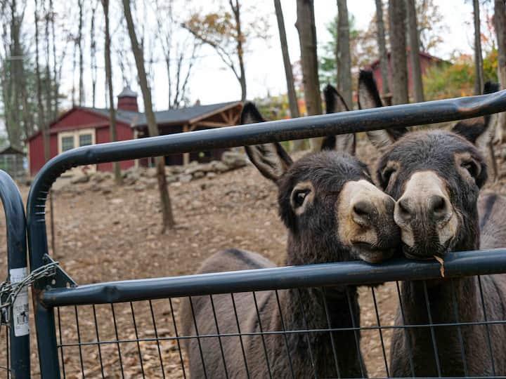 THE PARSONAGE @ SAF Donkey Sanctuary