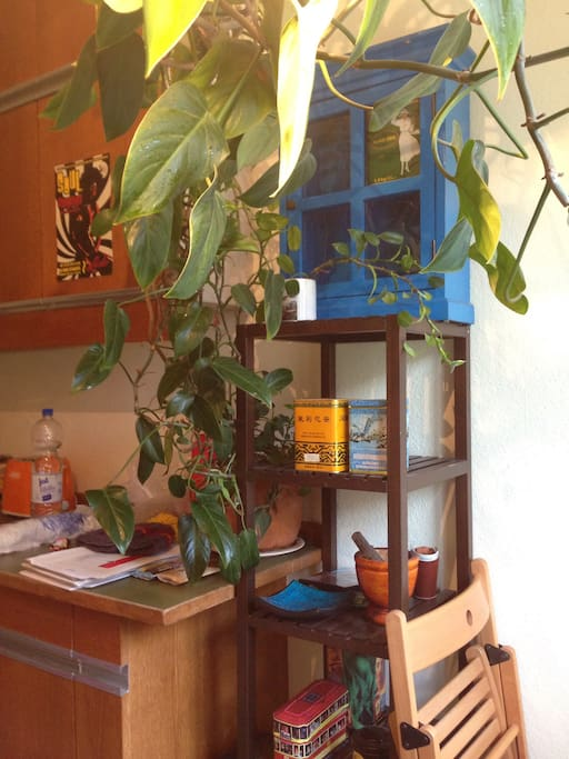 Kitchen with a plant