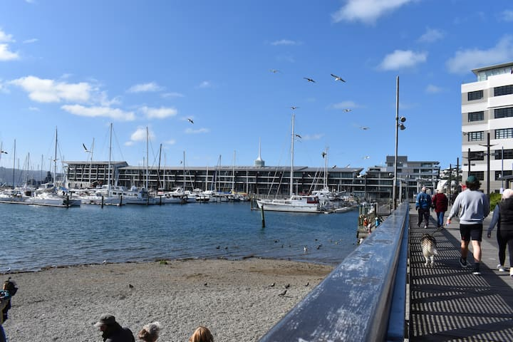 Wellington's beautiful waterfront is just across the road